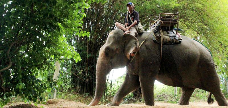 Деревня слонов, Тайланд
