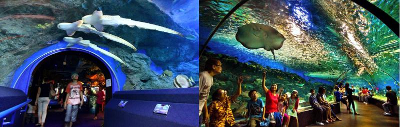 Океанариум в Паттайе «Underwaterworld»