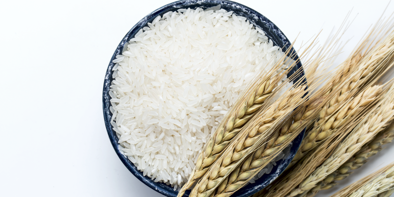 Рис в Тайланде, рис в Таиланде, тайский рис, рисовые поля Таиланд