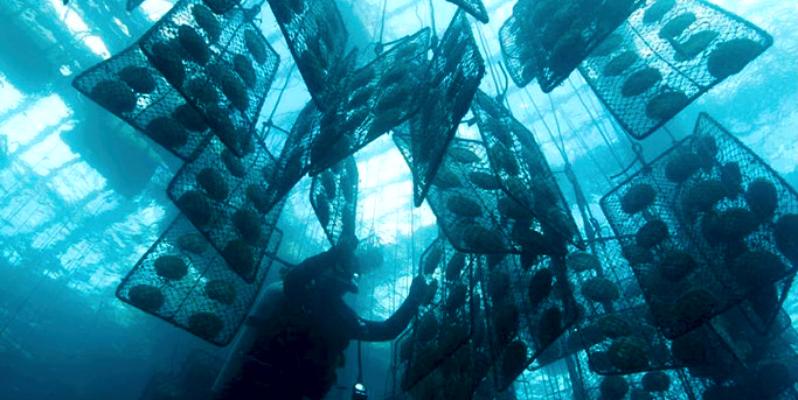 жемчуг под водой