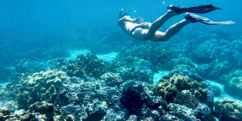 Подводный мир Май Тон