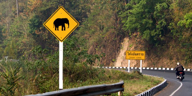Знак слон