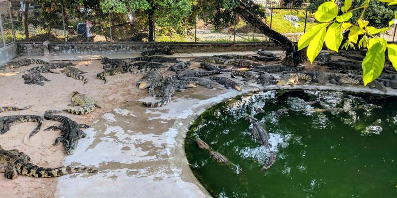 крокодиловая ферма Парк миллионолетних камней Паттайя, the million years stone park & pattaya crocodile farm, парк камней Паттайя, сад камней Таиланд, сад камней миллионолетних Паттайя