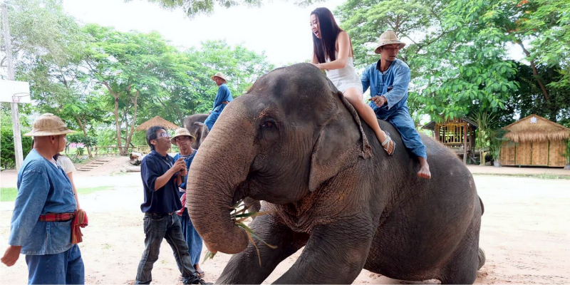 Паттайя экскурсии, девушка на слоне