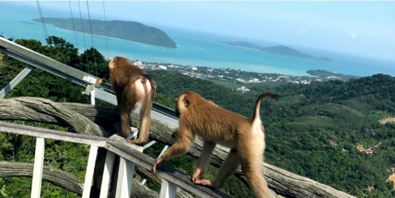 Пхукет, Phuket, Thailand, Таиланд, обезьяны, макаки