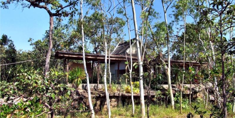 Флора и фауна, природа Тайланда