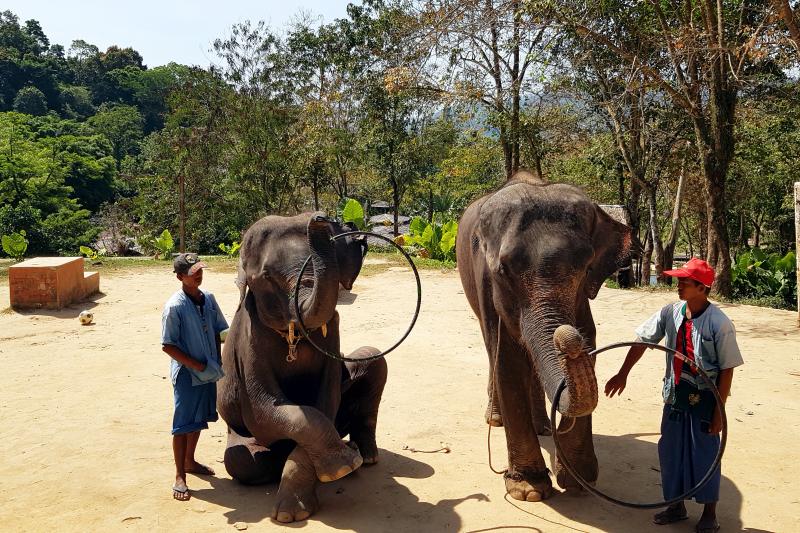Выступление тайских слонов, Слон в Таиланде